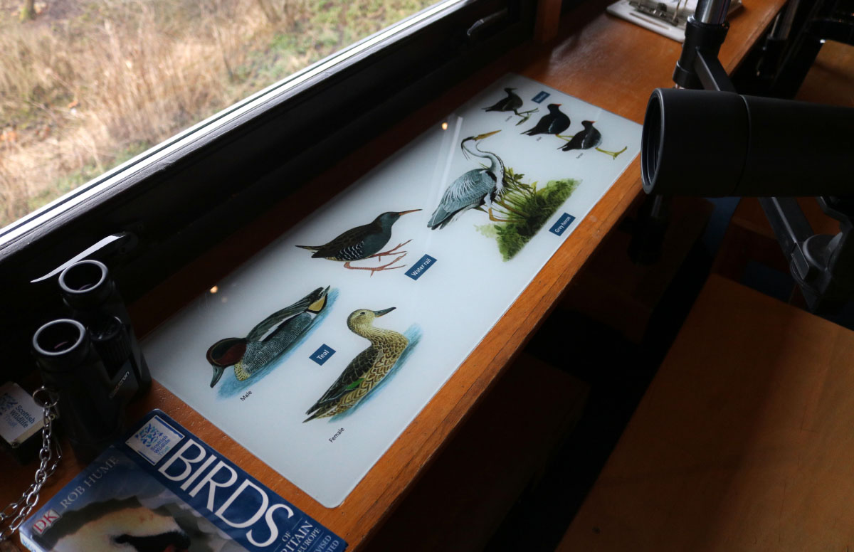 Bird identification panels